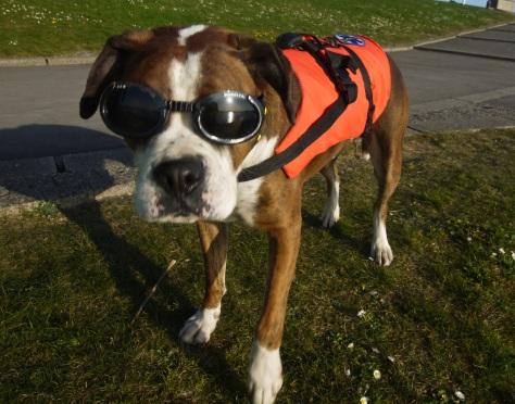 dave_and_bob_rescue_dog_web
