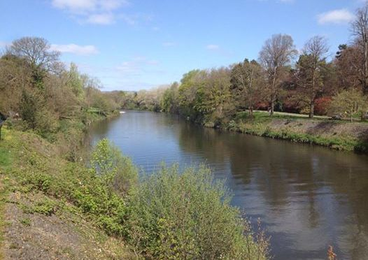 100 days in Cardiff – the River Taff at Bute Park