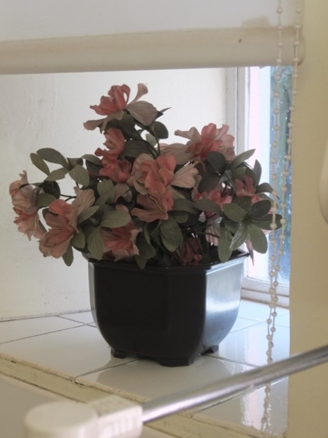 A potted plant in the 1980's kitchen