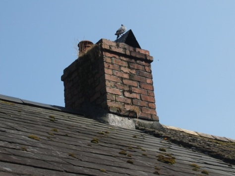 A pidgeon suns itself on a chimney pot