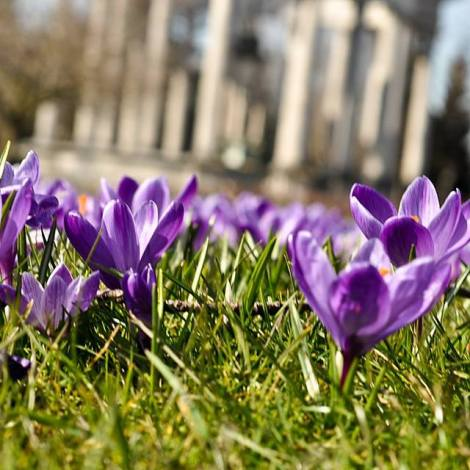 Spring in Cathays Park, Doug Nicholls
