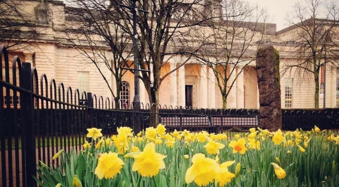 Daffodils in front of City Hall, Cardiff