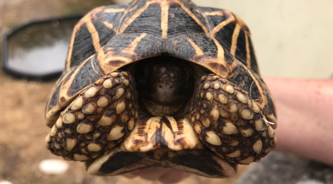 Meet Sully's tortoise lady – Ann Ovenstone, MBE